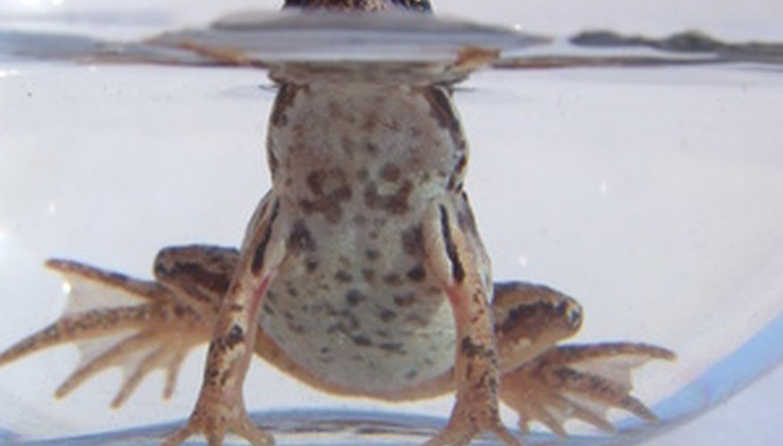 Frogs are sometimes used to determine LC50 of chemicals in water.