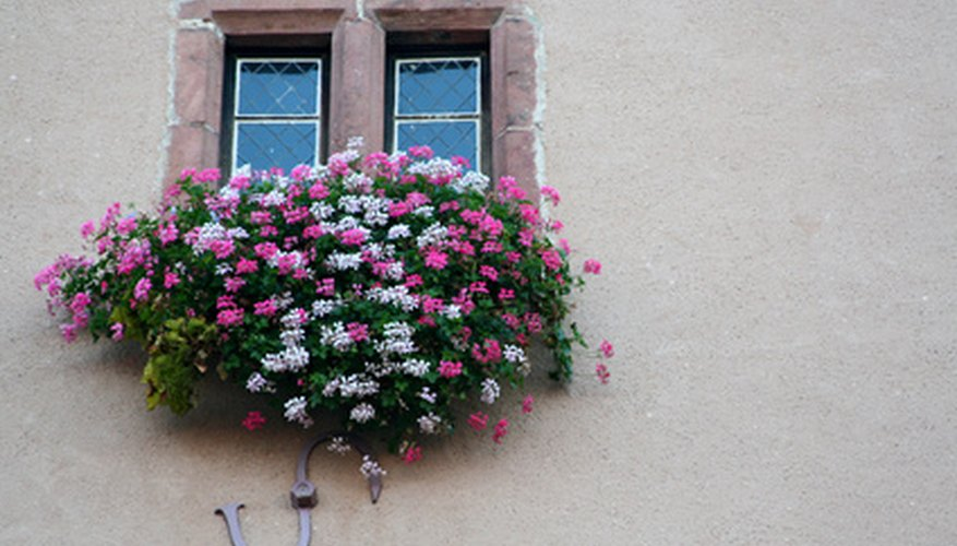 Create a window box with annual flowers.