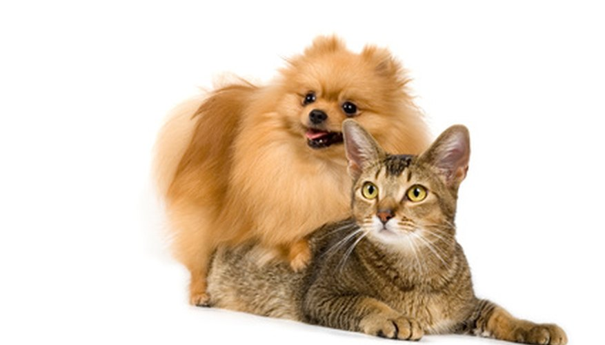 Ticks and fleas are a common problem for both dogs and cats.