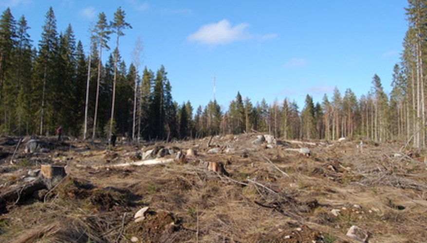 A forest, after it has been logged