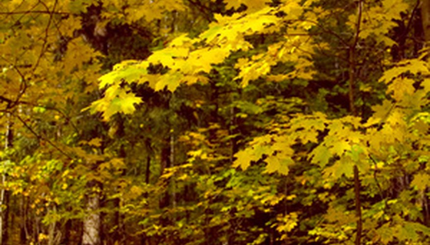 Temperate regions are home to fantastic color displays as seasons change.
