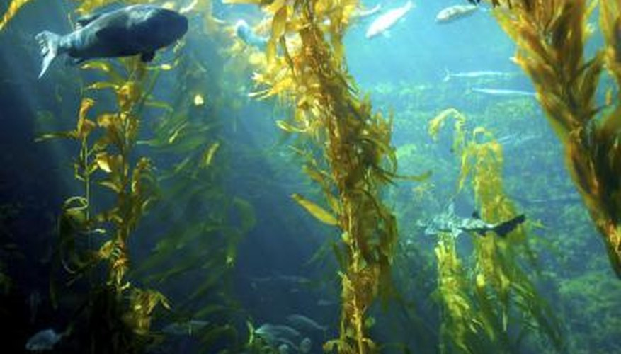 Plants and algae compete directly with each other in aquatic environments.