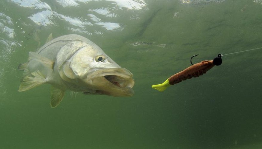 Popular Fishing Tips for Brackish Water