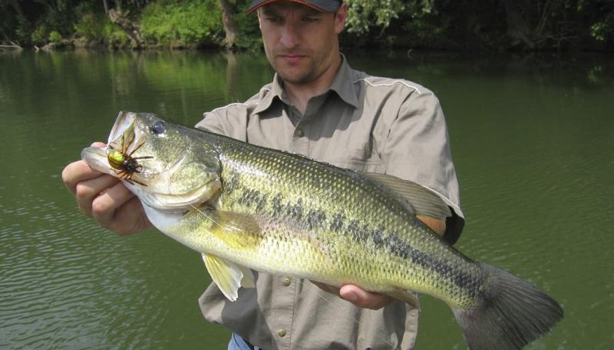 Fishing in Fremont, Ohio