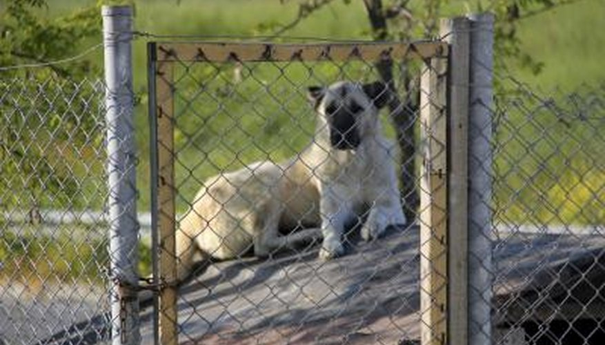 Humane societies provide care for animals at shelters and clinics.