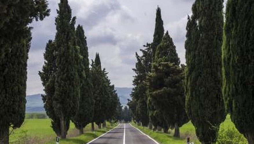 Columnar Evergreens Fit Into Landscape Sites When Other Trees Just Wonu0027t  Do. They Add A Stately Air Without Overwhelming Gardens And Break Up The  Horizontal ...