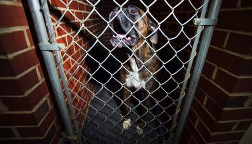 Chain link can keep your pet safe.