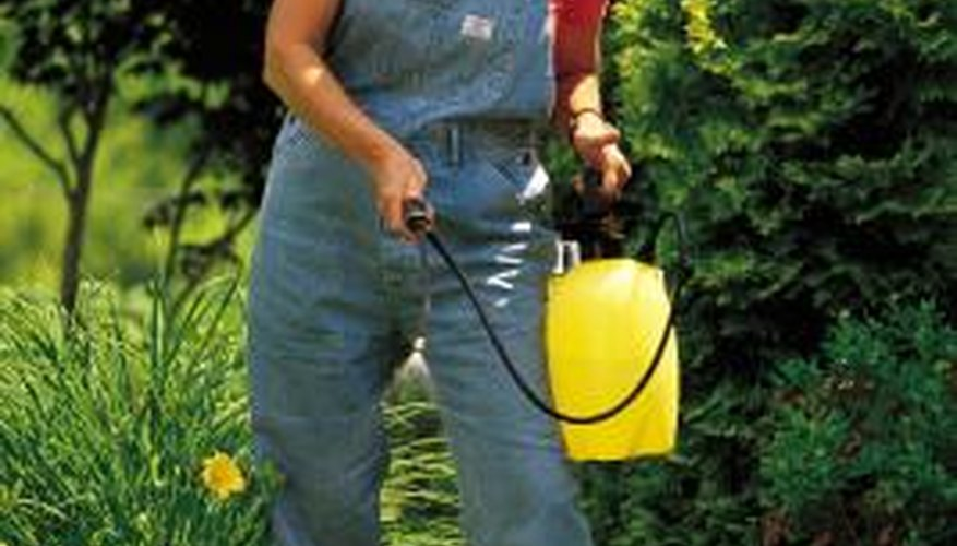 A hand sprayer can be used to apply herbicide.
