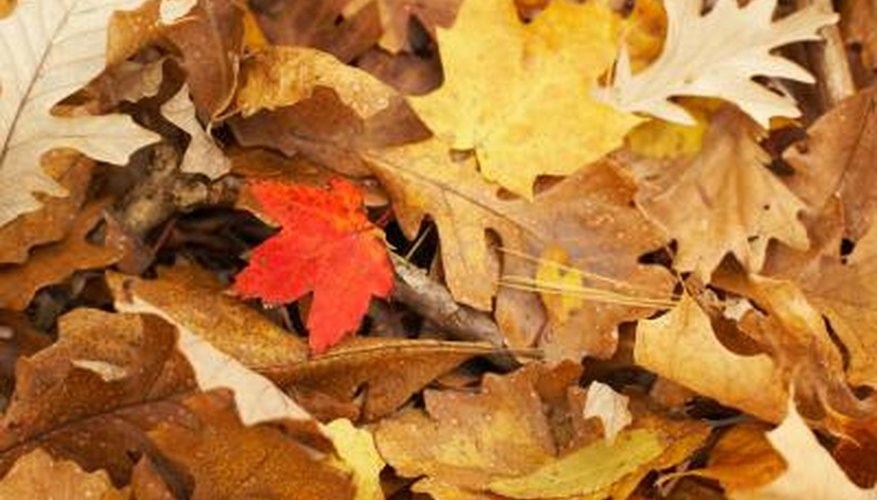Oak leaf colors range from brown to red to gold.