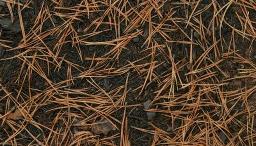 Pine needles make only a slight and temporary change in soil pH.