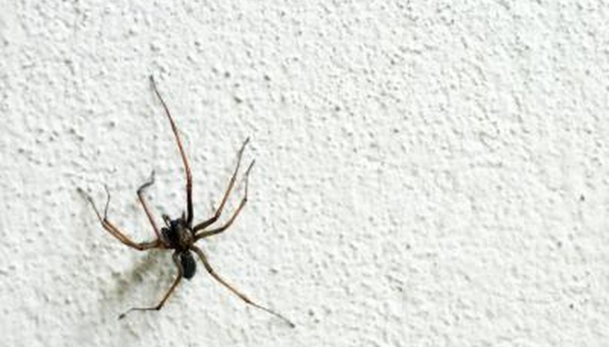 Common house spider.