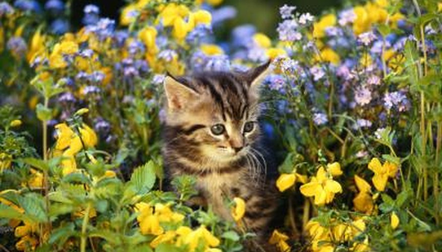 Some cats may treat a garden like a personal litter box.