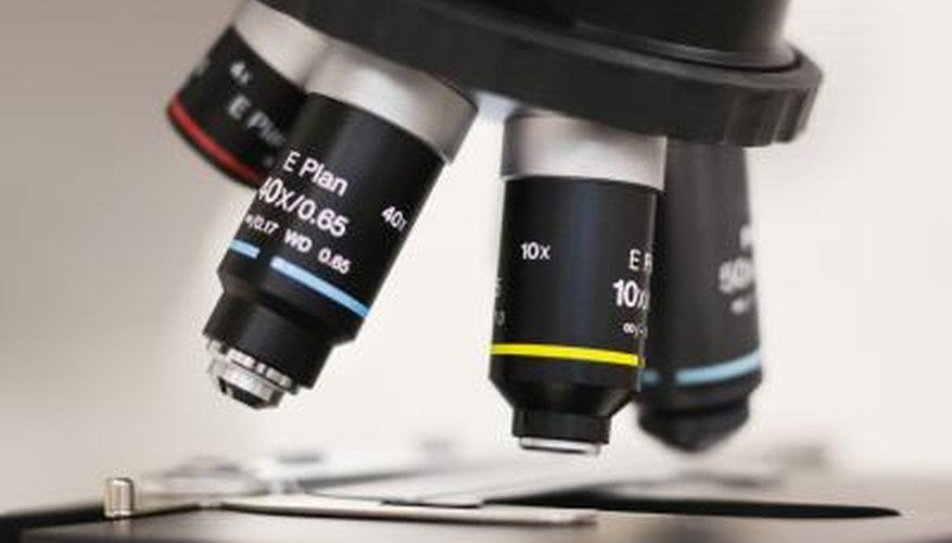 Parts Of The Microscope And Their Uses Sciencing