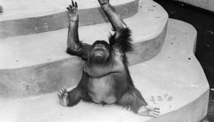 A chimpanzee can't make curved concrete stairs, but it's not too difficult.