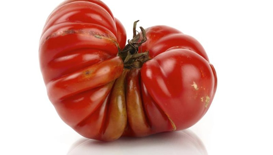 "Some beefsteak tomatore are ""pleated"" or ribbed on their surfaces."