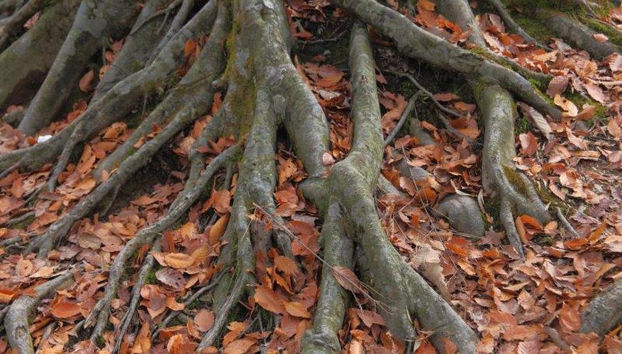 Tree roots.