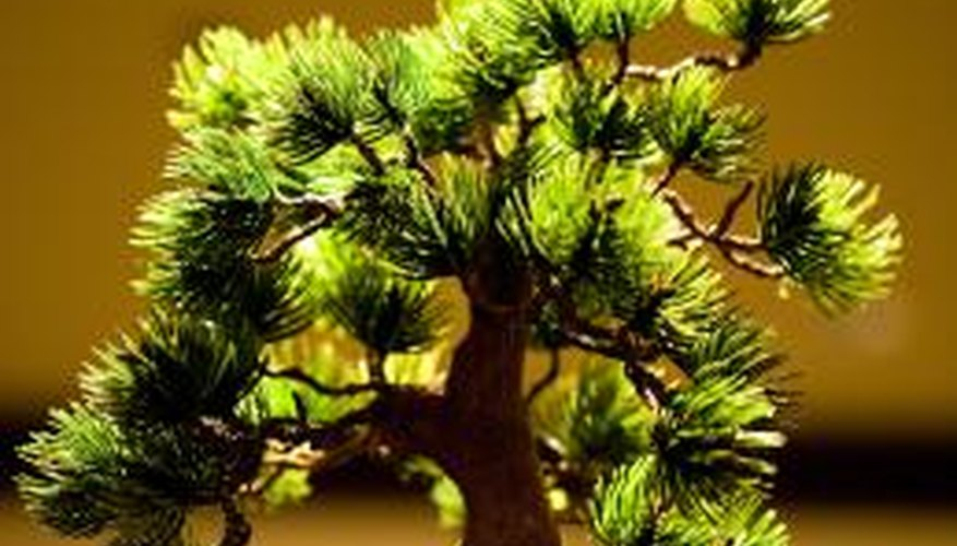 A miniature tree can be designed to look real.