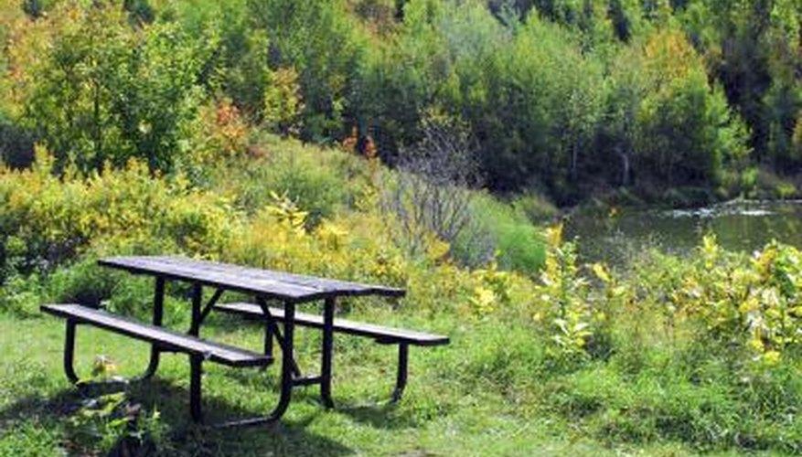 A shrub is a multi-stemmed plant that grows less than 25 feet tall.