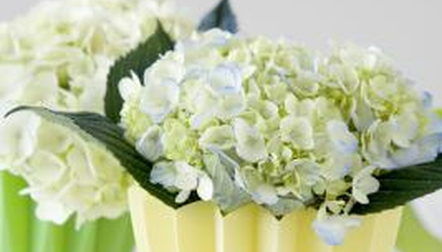 Cut hydrangea makes ideal wedding bouquets and cut-flower arrangements.
