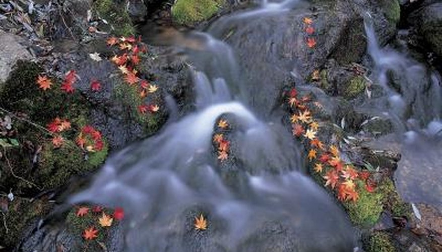 The forest relies on water for survival.