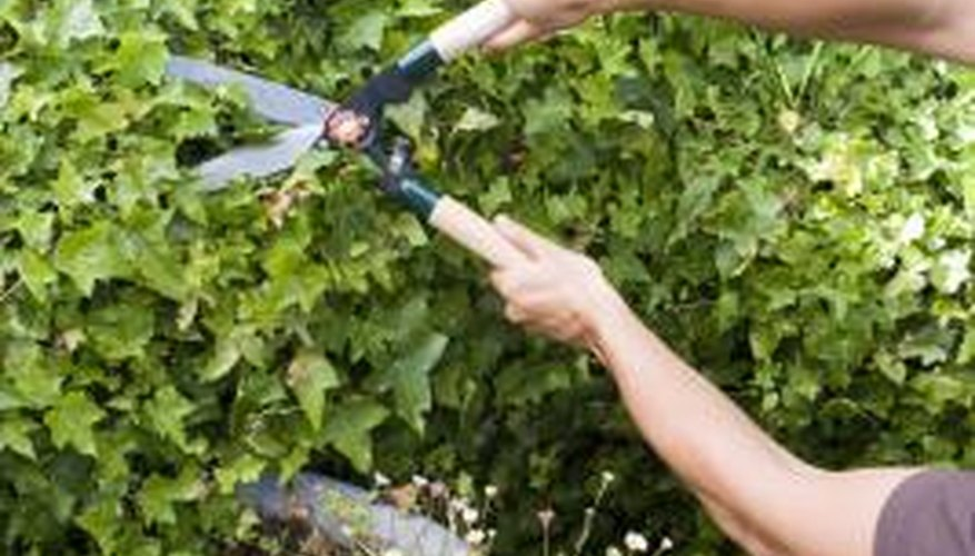 Regular pruning protects and enhances shrubs and trees.