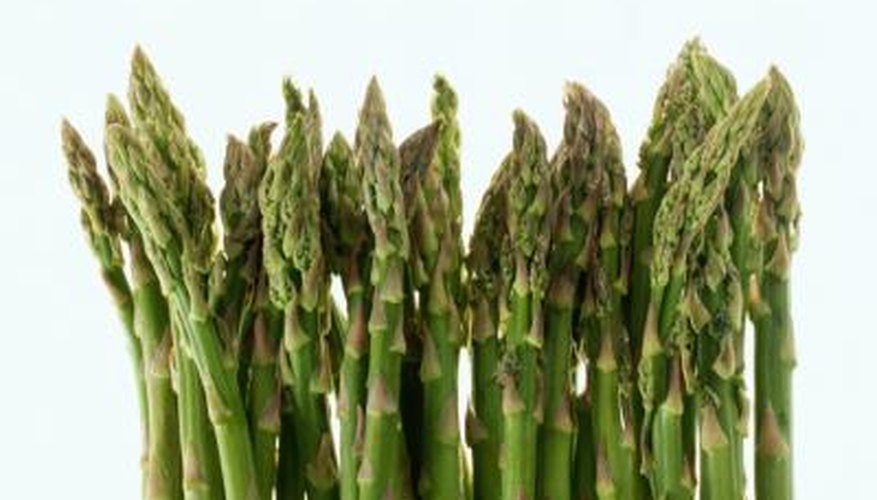 Male asparagus plants produce thinner and more evenly sized spears than do female.