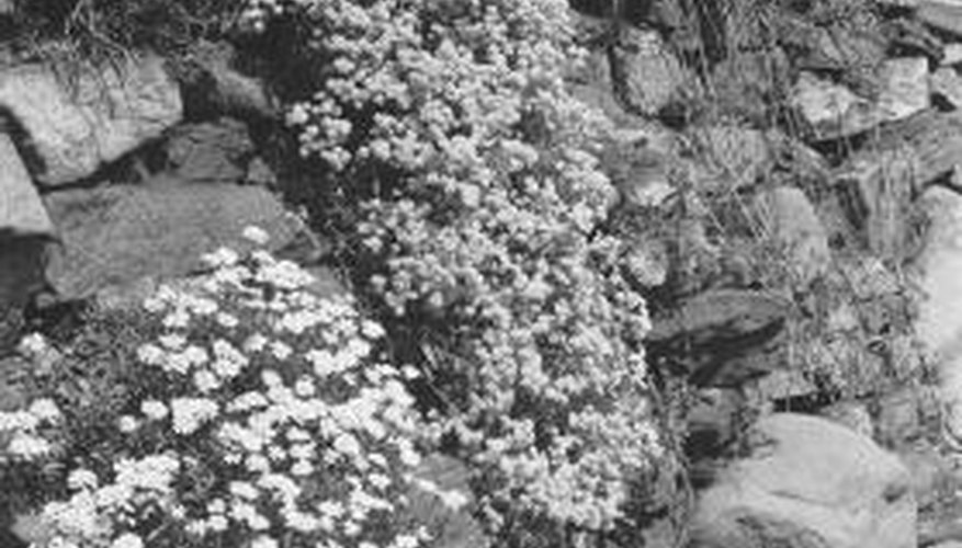 Plants growing between rocks add a touch of greenery.