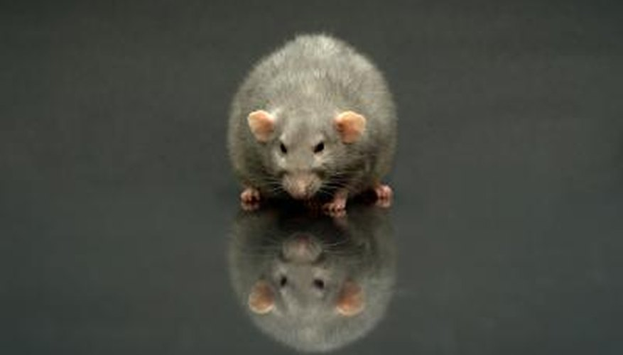 Rodents can present a large problem to homeowners.