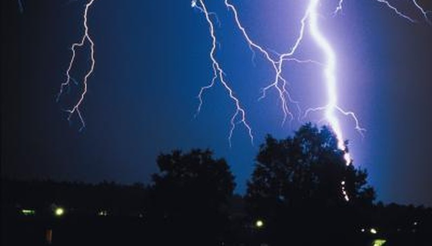 Install a lightning rod if you have a particularly vulnerable or valuable tree.