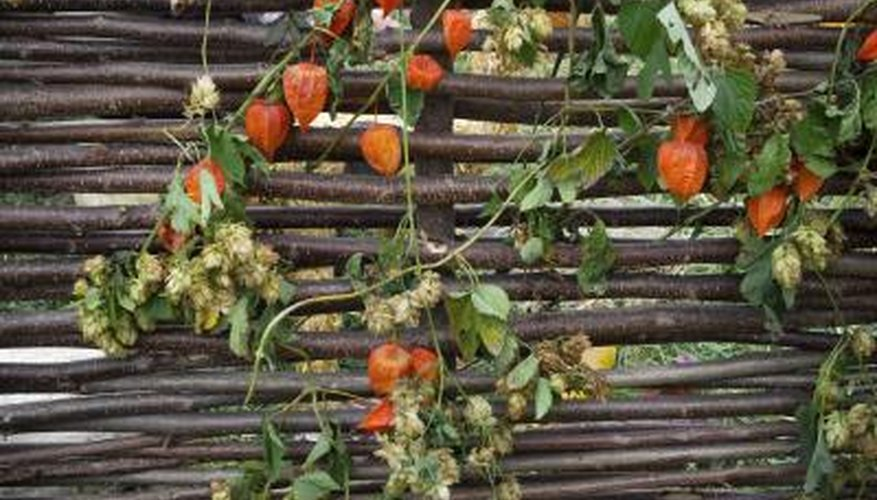 Small gaps between saplings are ideal for vines and creeping plants.