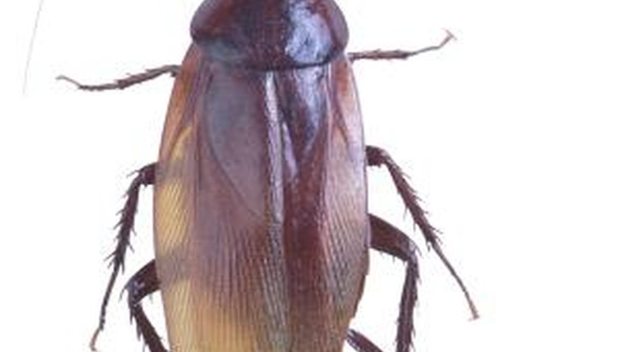 Ultrasound repellent devices supposedly keep roaches away.