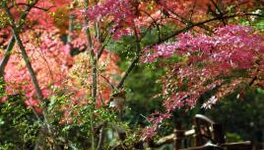 Japanese maples and evergreens add charm and character to your landscape.