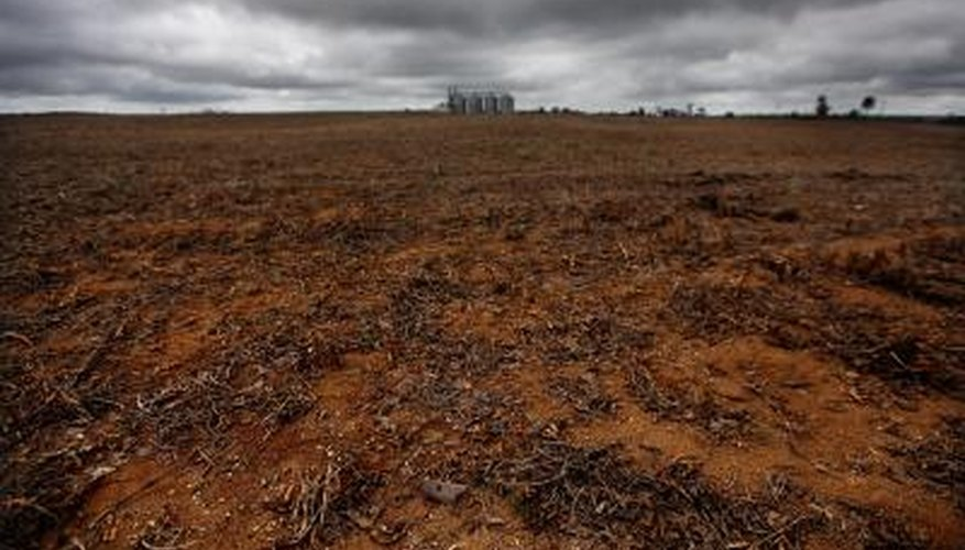 A soybean field replaces rainforest in Para State, Brazil.