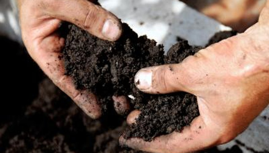 man touching organic compost