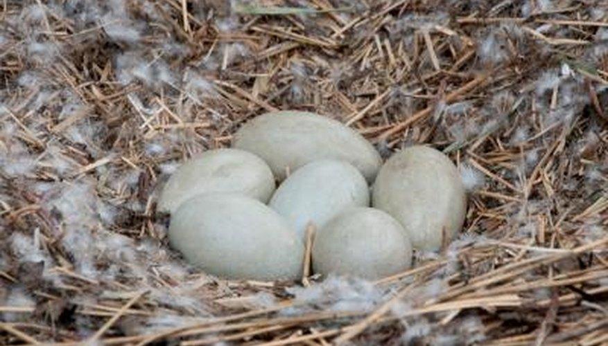 White Bird Egg Identification