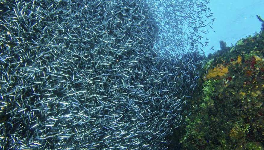 How to Use a Sabiki Rig to Catch Baitfish