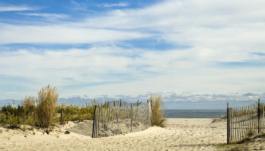 Grass growing along a beach entrance on the New Jersey shore.