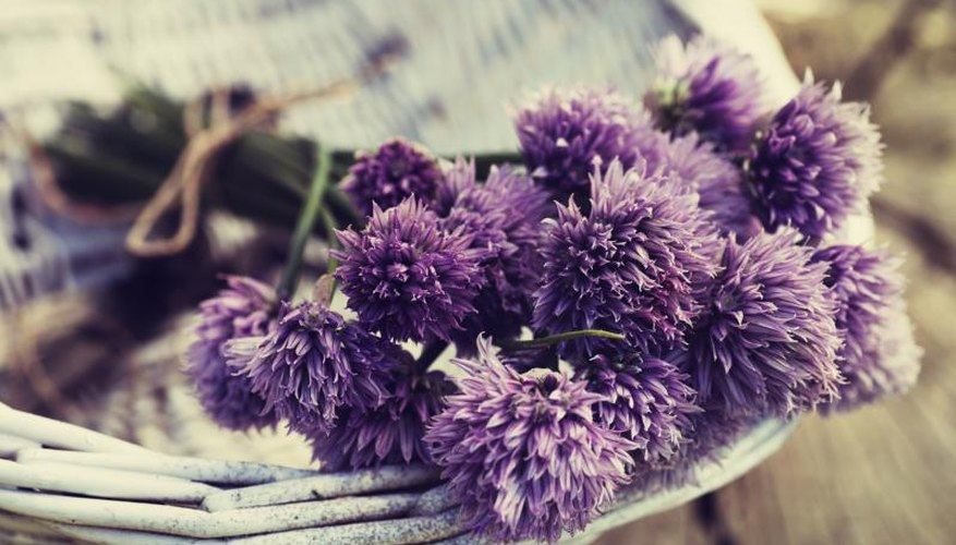 Use chives flowers for garnishes, in recipes and in floral arrangements.