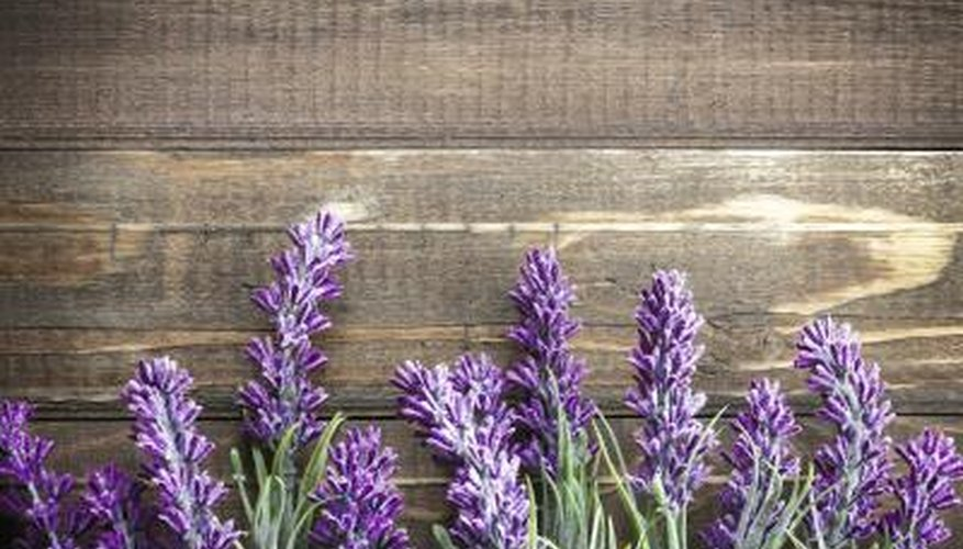Lavender has both soothing and antiseptic properties.