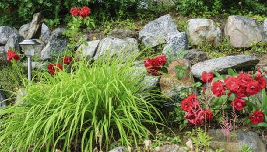 Brightly Colored Plants And Flowers Contrast Well With Gray Rocks.