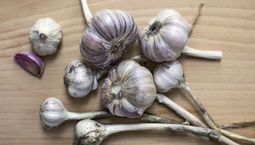 More than 600 varieties of garlic are grown across the globe.