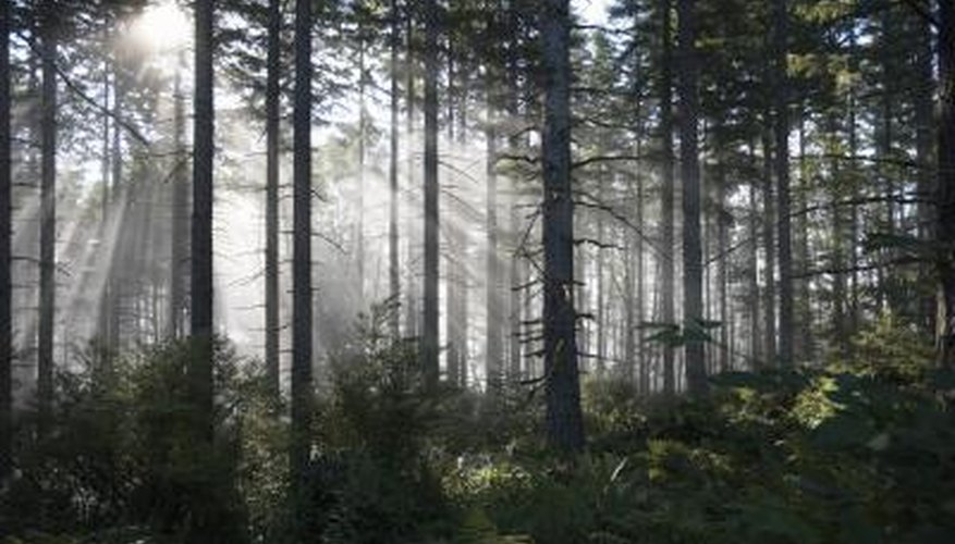 A beautiful forest in Washington.