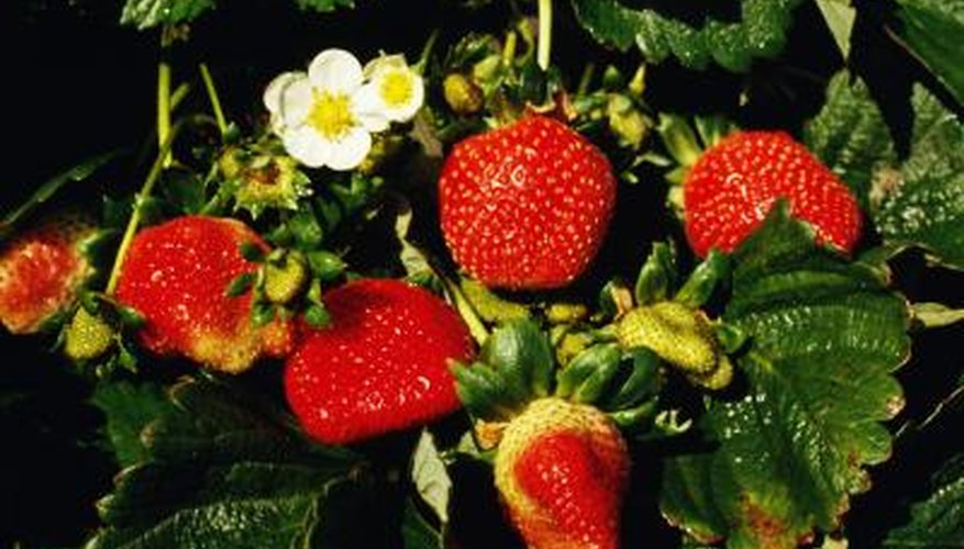 Protect your produce with strawberry cages.