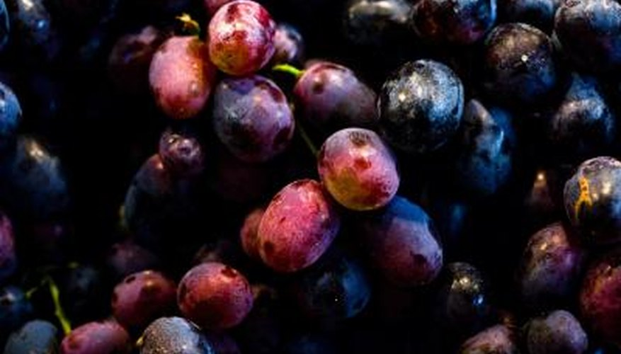 Frozen grapes can be used for juicing.