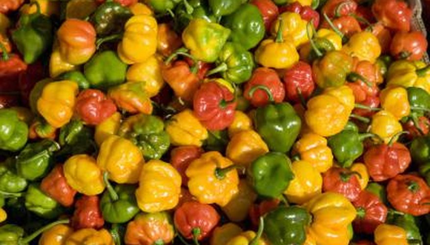Scotch bonnets are among the perennial pepper plants that can heat up--really heat up--your dinner.