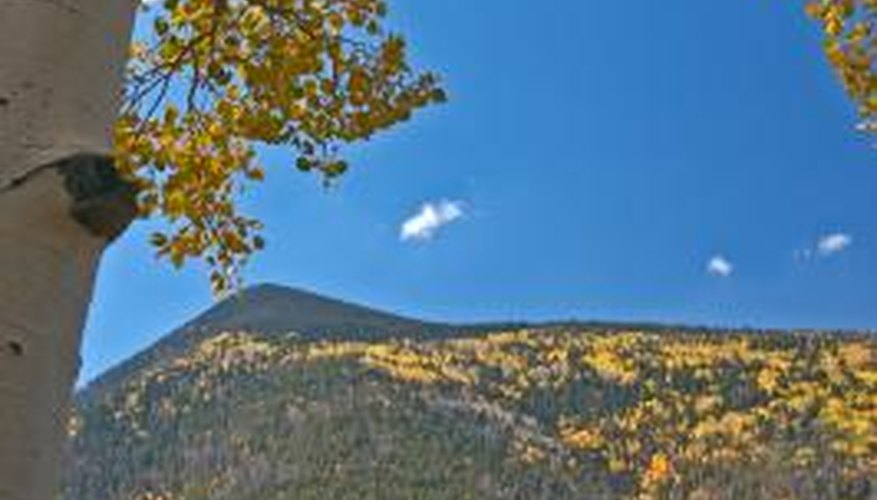 Yellow aspen shimmer on the mountains outside your cabin in October.