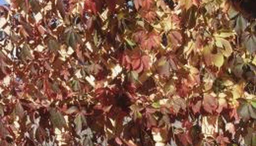 Grow creeping vines on your deck lattice.