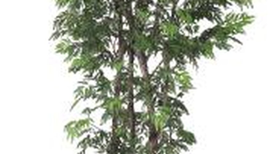 A tall potted tree can help cover or disguise an air conditioning unit.
