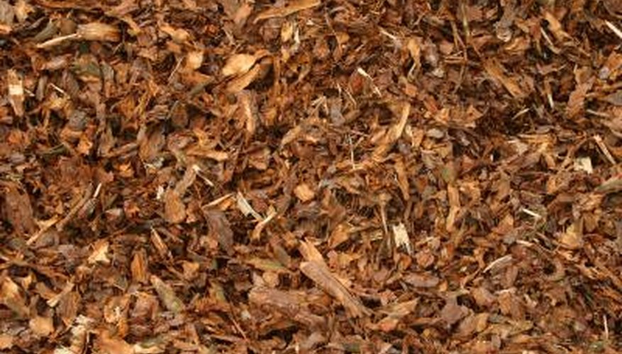 Spread mulch or gravel at the base of trees to protect roots and inhibit weeds.