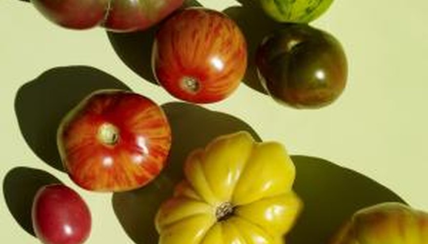 Tomatoes are among the plants closely related to tobacco.